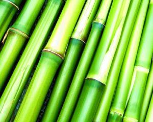 bambusova_masaz_studio_quatro_kyjov_bambus